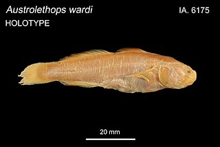 Small-eyed goby species of fish