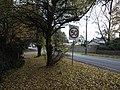 Autumn Leaves in Olinda, Victoria, Australia (3).JPG