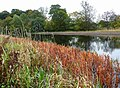Autumn colour on the Forth and Clyde Canal - geograph.org.uk - 1006186.jpg