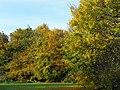 Autumn colours (25602820583).jpg