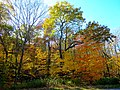 Autumn in Devil's Lake State Park - panoramio.jpg