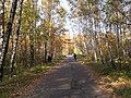Autumn on Paper Alley - panoramio.jpg