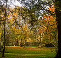 Autumn scene at Woodleigh (4 of 7).jpg