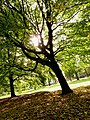 Autumn trees in Whitworth Park in Moss Side, Manchester - panoramio.jpg