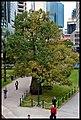 BOAB (Bottle Tree) ANZAC Square-1+ (2641766268).jpg