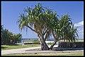 Balina look-out-2and (3147201096).jpg