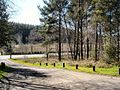 Ballykelly forest - geograph.org.uk - 388567.jpg