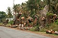 Banyans being cut along road IMG 4169.jpg