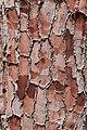Bark 3 (31548877430).jpg