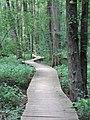 Battle Creek Cypress Swamp 50.jpg
