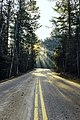 Bear Head State Park Road (Unsplash).jpg