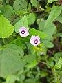 Beautiful flowers in rural eriya.jpg