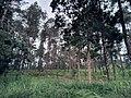 Beautiful pine forest of Grenden Magelang.jpg