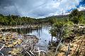 Beaver Dam - Tierra del Fuego National Park, Argentina.jpg