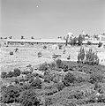 Bebouwing en begroeiing rondom Jeruzalem, Bestanddeelnr 255-2311.jpg