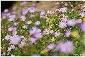 Bee On A Flower (33819399).jpeg