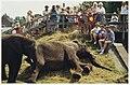 Bennebroekers die niet op het strand of in de achtertuin lagen, konden getuige zijn van een lunch op grote voet. De Afrikaanse vrouwtjesolifanten Tonga en Tembo van het Berlijnse Circus Am, NL-HlmNHA 54036180.JPG