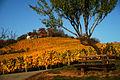 Bensheim im Herbst 11.jpg