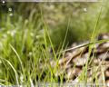 Beryl-Desktop.png