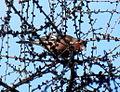 Birds14Slovakia2.JPG