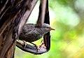 Birds in the garden 3.jpg
