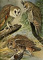 Birds of Massachusetts and other New England states (1925) (20376583532).jpg