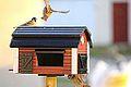 Birdy nam nam (11012465295).jpg