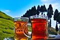 Black tea- Gopaldhara tea estate- Darjeeling- DSC 0548.jpg