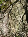 Blansko, blanenské bouldery (5).JPG
