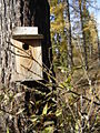 Blue Bird House on Nature Trail at the Creston National Fish Hatchery (8388062646).jpg