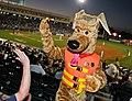 Bobber the Water Safety Dog high-fives fans (7339138752).jpg