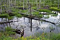 Bog near Bear River, PEI (198443467).jpg