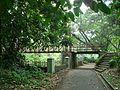 Bogor Botanical Gardens Java42.jpg