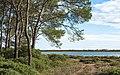 Bois des Aresquiers, Vic-la-Gardiole, Hérault 06.jpg