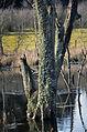 Bois mort lichens 0142.JPG