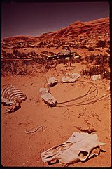 Bony Remains of Dead Cattle Outside the Moab City Dump, 05-1972 (3814169819).jpg