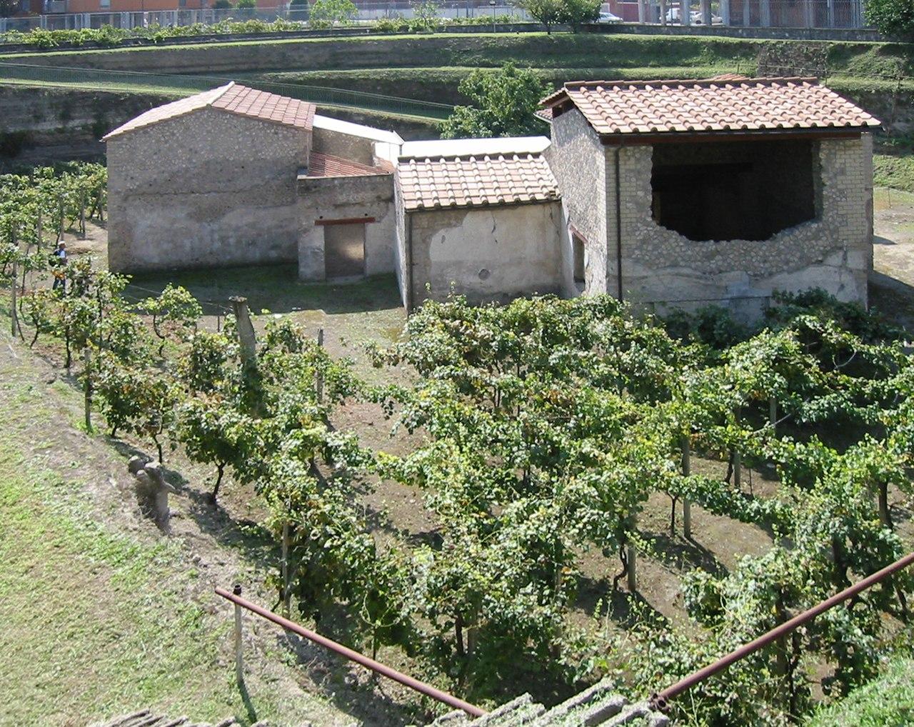 Villa Bosco Reale Schema Dioniso Arianno
