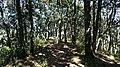 Bosque de Bellotas, Amealco.jpg