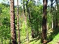Bosque de Oma (33).JPG