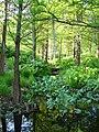 Botanischer-Garten-Hamburg-1050662.JPG