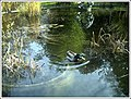 Botanischer Garten Freiburg - Botany Photography - panoramio (11).jpg