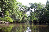 Bottle Creek.jpg