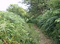 Bracken path towards Limerstone - geograph.org.uk - 502240.jpg