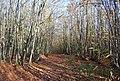 Bridleway through Hurst Wood - geograph.org.uk - 1570650.jpg