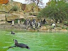 berlin zoological garden wikipedia. Black Bedroom Furniture Sets. Home Design Ideas