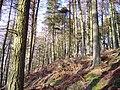 Brown Dod Wood - geograph.org.uk - 156202.jpg