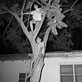 Bruiloft in de kibboets Yad Mordechai bij Asjkelon in het zuidwesten van Israel., Bestanddeelnr 255-4194.jpg