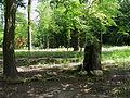 Bucha park20.JPG