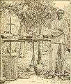 Bulletin (1918) (20235831808).jpg
