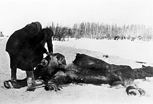 Horse meat - Hunger during World War II led to horses being eaten.